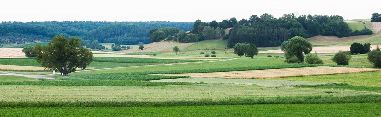 Naturlandschaft » Schönbuchmilch Hof Horrer